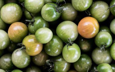 Grøn tomatmarmelade